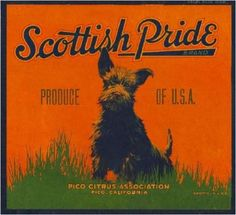 Scottish Terrier Puppy, Terrier Dogs, Label Art, Vegetable Crates, Vintage Labels, Dog Art, Vintage Advertisements, Dog Love, Dogs And Puppies