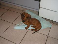 ziggy, um dos meus filhos <3 quando era bebê
