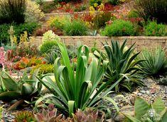 Landscaping San Luis Obispo - Gardens by Gabriel - Portfolio of Central Coast Drought Tolerant Landscape Design Installation