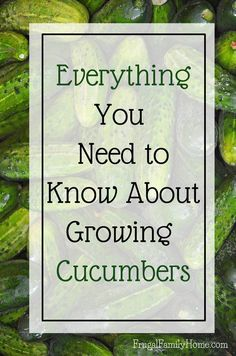 Growing Cucumbers, Everything You Need to Know is part of garden Tips Cucumbers - If you want to grow cucumbers in your own garden here is everything you'll need to know, from seed to harvest to grow your own cucumbers at home Growing Cucumbers From Seed, What To Plant When, Growing Zucchini, Growing Vegetables In Containers, Growing Veggies, Raised Bed Garden Design, Cucumber Seeds, Grow Cucumber, Cucumber Plant