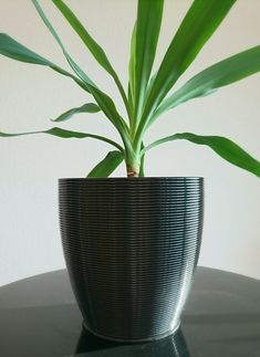 Erste Prints Decor, Vase, Home Decor, Pot