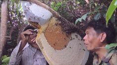 สุดยอด!! เทคนิค- วิธีการ ตีผึ้งหลวง  How to remove a bee