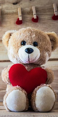 Happy Teddy Day Images, Teddy Bear Images, Teddy Bear Pictures, Bear Photos, Cute Couple Drawings, Cute Cartoon Drawings, Teddy Bear Party, Cute Teddy Bears, Bear Wallpaper