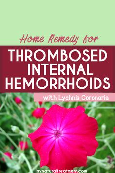 Here you have the most amazing home remedy for thrombosed internal hemorrhoids using a simple herb called Lychnis Coronaria. Natural Treatments, Natural Remedies, Garlic Supplements, Home Remedies For Hemorrhoids, Getting Rid Of Hemorrhoids, Natural Herbs, Natural Healing