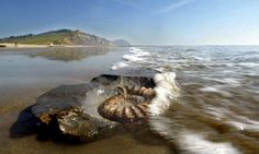 Charmouth Beach, the family hunting ground for fossils!