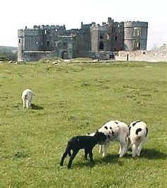 Carew Castle, Wales, UK setting of The Great Tournament of 1507. #castle #architecture