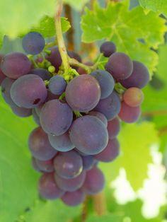 dyrke-druer