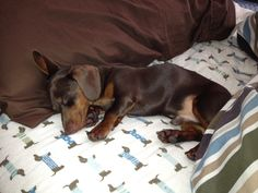 .keeping your spot warm... (geez, how cute is he!? C.).