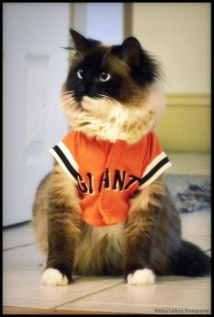 Giants baseball and cats; two of my favorite things in this world.