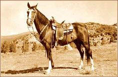 "The original Champion who appeared in early Gene Autry movies. There were several other ""Champion"" billed horses throughout Autry's film career."
