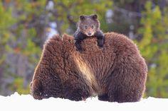 Peekaboo Cub by Steve Hinch