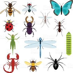 Cartoon isolated colorful insects set royalty-free stock vector art