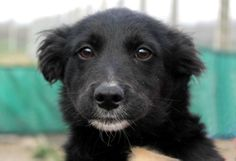 Little 4-month-old Keyla is looking for a home! / Piccola Keyla (4 mesi) cerca casa! Info: adozioni@leudica.org ADOPTED!