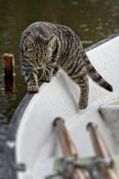 cats on boats see more at http://blog.blackboxs.ru/category/funny-cats/