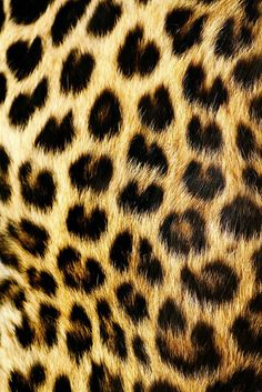 love will tear us apart Patterns In Nature, Textures Patterns, Print Patterns, Cheetah Background, Leopard Print Wallpaper, Leopard Prints, Black Wallpaper, Tier Fotos, Stuffed Animal Patterns