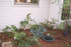 Yard 5 Stewart Court :: DCP_4164.jpg image by wantonfox1 - Photobucket