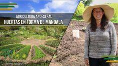 Agricultura Ancestral: Huertas en Forma de Mandala - TvAgro por Juan Gon...