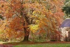Autumn colours by MaresaSinclair