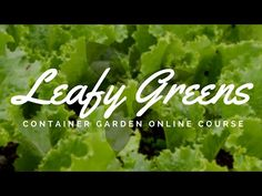 Learn how to grow 3 cups of leafy greens no matter your space or time constraints! Professional organic gardener, Lynn Gillespie, will teach you all the skil. Recovery Food, Growing Lettuce, Garden Online, Gardening Courses, Garden Show, Beyond Words, Health Eating, Urban Farming, Detox Recipes