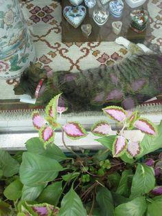 O gato é verdadeiro e as plantas são lindas