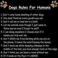 Dog Rules!