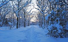 Winter Path Wallpaper : Find best latest Winter Path Wallpaper in HD for your PC desktop background & mobile phones.