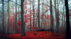 Скачать обои лес, осень, природа, раздел природа в разрешении 1600x900