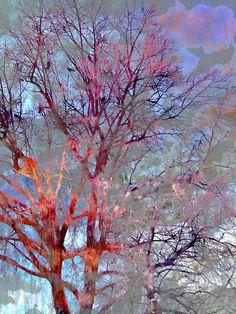 Red Trees - 30x40 inches - Ellen Scobie