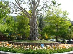 Gilroy Gardens, Gilroy, California . 8 Extraordinary Pieces of Architecture Grown From Living Trees | Atlas Obscura