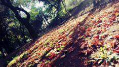 Automn leaves in Kalamata!!