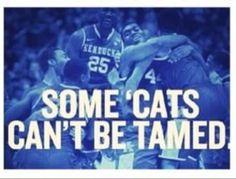 Some 'Cats Can't Be Tamed. #wildcats #kentucky #universityofkentucky