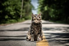 Warning: spoilers for Pet Sematary ahead! The 2019 remake of Pet Sematary is now busy terrifying a whole new generation of Stephen King fans, but it's Stephen King It, Jason Clarke, Pet Sematary, Zombie Movies, Scary Movies, New Movies, Horror Movie Posters, Horror Movies, Horror Films