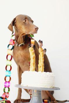 dog treat birthday candles DIY
