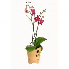 Pflanztopf für Orchideen. Zweiteiliger Topf für Orchideen aus Keramik mit Wasserreservoir für optimale Feuchtigkeitsregulierung. 59,90 €