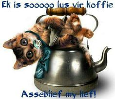So lus vir koffie Catching Mice, Afrikaanse Quotes, Clouded Leopard, Goeie More, Snow Leopard, Mammals, Kitty, Pets, My Love