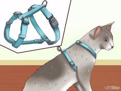 Image titled Leash Train a Cat Step 2 How to Leash Train a Cat. Teaching a cat to walk on a leash allows an indoor cat safe access to the great outdoors. Leash training can also be a good stepping stone if you eventually want to help your cat go outside u Love Your Pet, Love Pet, Your Dog, Cool Cats, Diy Jouet Pour Chat, Pet Dogs, Dogs And Puppies, Gatos Cool, Cat Steps