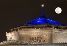 "Shedd Aquarium, Chicago, IL, National Historic Landmark, Photo: Michelle Anderson:  On the shore of Lake Michigan, ""The Shedd"" was the nation's first inland aquarium to maintain a permanent collection of fresh and saltwater aquatic life. John G. Shedd, president of retail giant Marshall Field & Company, endowed the institution, which opened in 1930 to provide ""instructive entertainment."" The handsome marble building has Greek architectural details on the exterior and aquatic decorations…"