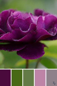 ZJ Colour Palette 163 #colourpalette #colourinspiration