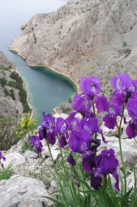 In wilderness and harshness they survived and look even more pretty & vibrant~ Velebit, Croatia Beautiful World, Beautiful Places, Paradise Places, Plitvice Lakes National Park, Wonders Of The World, Places To See, The Good Place, Slovenia, National Parks