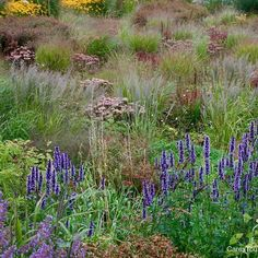 "The ""prairie"" garden Lianne's Siergrassen. Magical softly swaying grasses & perennials"