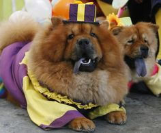 Fat Dog