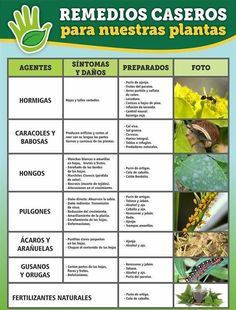 Eco Garden, Backyard Vegetable Gardens, Garden Care, Edible Garden, Indoor Garden, Plant Growth, Plant Care, Farm Gardens, Outdoor Gardens