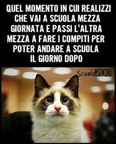 Meme ScuolaZoo
