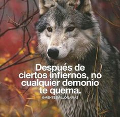 Frases Wolf, Spanish Quotes, Beast Mode, Fun Facts, Life Quotes, Inspirational Quotes, Positivity, Humor, Memes