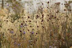 Sarah Price Landscapes is a specialist landscape and garden design consultancy. Lake Garden, Meadow Garden, Garden Landscape Design, Garden Landscaping, Landscaping Ideas, Backyard Ideas, Olympic Garden, Prairie Garden, European Garden