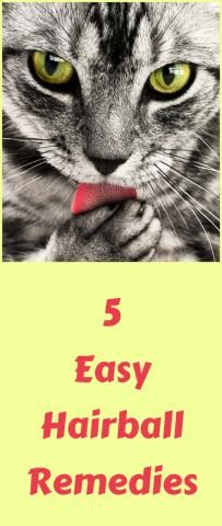 5 Easy Hairball Remedies For Your Cat...see more at PetsLady.com -The FUN site for Animal Lovers