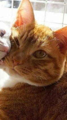 Metadinha 2 Friends Wallpaper, Couple Wallpaper, Disney Wallpaper, Wallpaper Gatos, Drawing Wallpaper, Cute Little Kittens, Cute Cats, Animals And Pets, Baby Animals