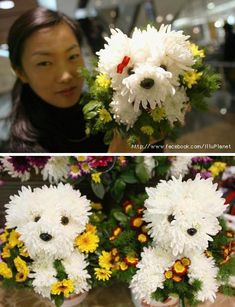 fdog flower arrangement - Yahoo Image Search Results