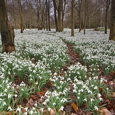 Film, TV and photographic | Welford Park Come and see the Snowdrops
