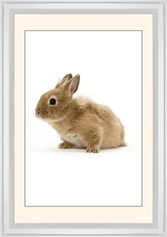 Bunny Framed Print, White, Classic, Black, Cream, Single piece, 20 x 30 inches